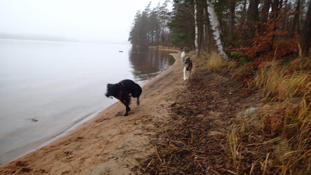 Hundespaß am See Unnen